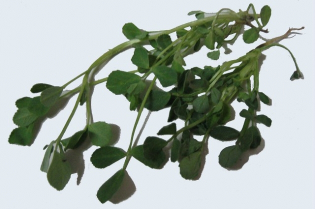 Beneficios y usos medicinales del fenogreco 3.jpg