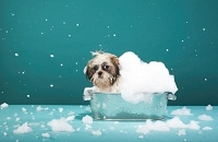 Remedios caseros y naturales para mascotas_2.jpg